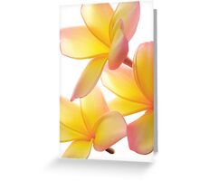 Yellow Frangipani Greeting Card
