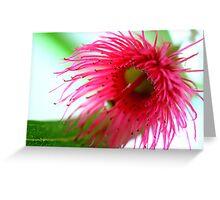 gum blossom Greeting Card