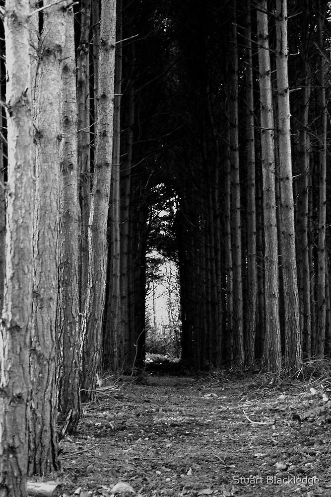 Dark Avenue by Stuart Blackledge