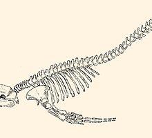 whale skeleton by Alephredo Muñoz