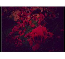 The Secret Garden .. Photographic Print