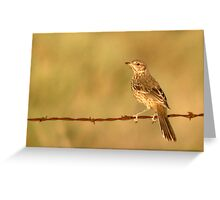Sage Thrasher on Barbed Wire Fence Greeting Card
