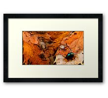 A Fly of Nature Framed Print