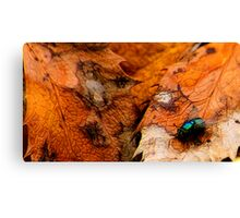 A Fly of Nature Canvas Print