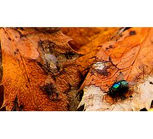 A Fly of Nature Photographic Print