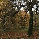 Albana trees falling at the fall by miradorpictures