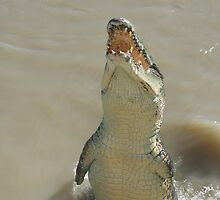 Croc Jumping by balcs