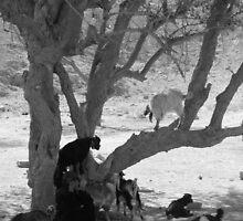 Bedouin Life by balcs
