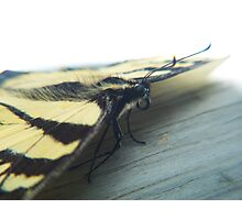 Butterfly Portrait Photographic Print