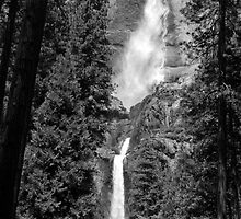 Yosemite Falls Treescape by Benjamin Padgett