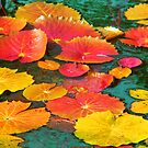 Colorful Water Lily Leaves by Rosalie Scanlon