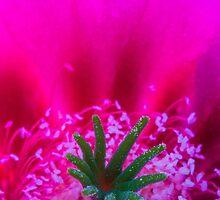 Desert Flower by BGSPhoto