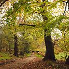 Pathway to the enchanted wood by miradorpictures