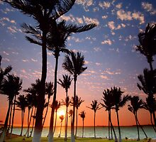 Dancing Dampier Palms by Matt Halls