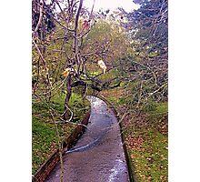 Creek in the Adelaide Botanic Gardens Photographic Print
