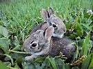 2 Baby Bunnies in the Grass - Nature Photography by Barberelli