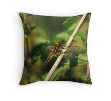 Dragonfly, Black-lined Skimmer, Orthetrum cancellatum Throw Pillow