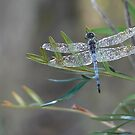 I LOVE DRAGONFLIES by louisegreen