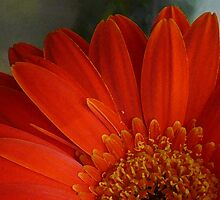 Hot Floral by AngelHoney