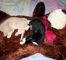 Two kittens sleeping on a teddy bear by Barberelli