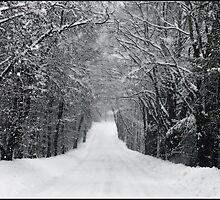 Dumprun Snowstorm by Wayne King