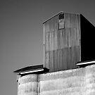 grain by Belinda Fraser