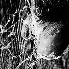 The dunny door by Belinda Fraser