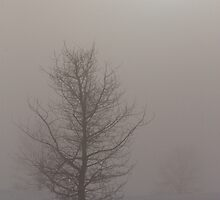 Tree in the Fog by Kathi Huff