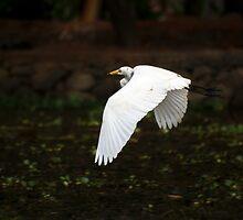 Egret in Flight by Brent Olson