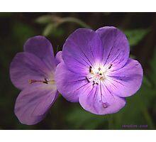 Cranesbill Blossoms Photographic Print
