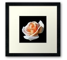 pretty yellow rose flower in black ground. Framed Print