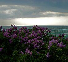 Lilacs by F.  Kevin  Wynkoop