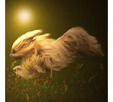 Free, as the wind Photographic Print