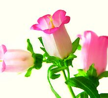 Pink Bells by jerry  alcantara