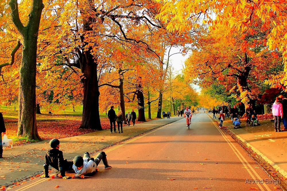 Colours of Automn !! by Arvind Singh