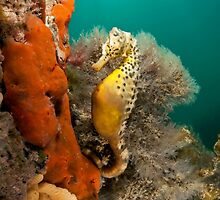 Potbelly on Pylon. by James Peake Nature Photography.