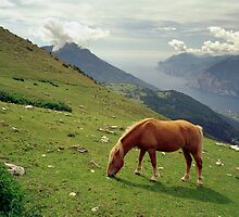 Horse at Monte Stivo, Italy by Lenka
