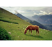 Horse at Monte Stivo, Italy Photographic Print
