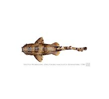 Spotted Wobbegong Shark (Orectolobus maculatus) by StickFigureFish
