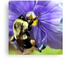 Bumble Bee on Pansy Canvas Print
