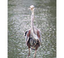 Goofy Heron Photographic Print