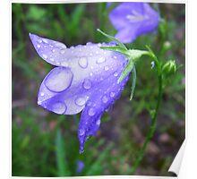 Purple Dew Poster