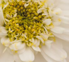 White Mini Chrysanthemum Macro Sticker
