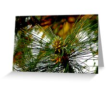 Pine Cone Glow Greeting Card