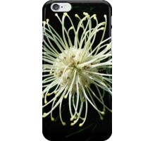 Grevillea Moonlight iPhone Case/Skin