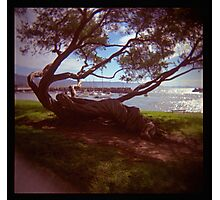 holga madness.....twisted tree down by the sea Photographic Print