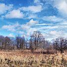 Winter Sky by Monnie Ryan