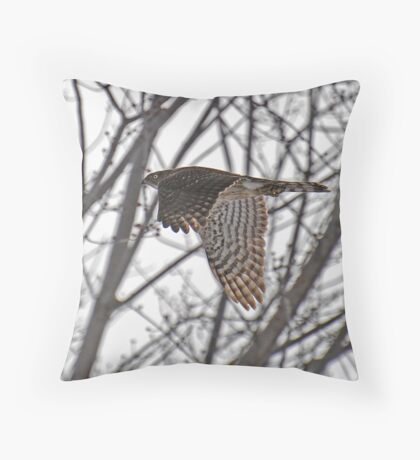 """ Sharp - shinned Hawk "" Throw Pillow"