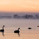 Swan Lake. by DaveBassett