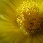 Flower hart by Cristel Gous-Veefkind